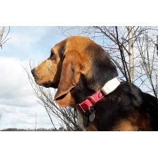 Collier GPS WEENECT Chien